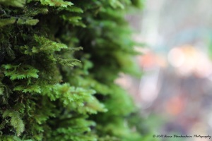 Moss On The Trees
