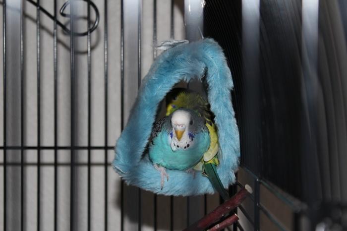 Snuggled Birds
