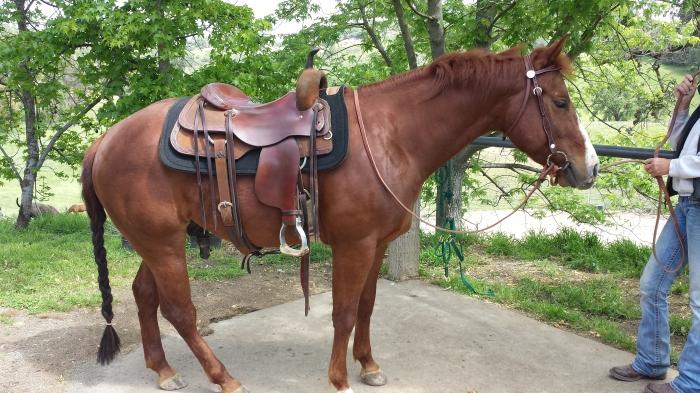 Sue's Saddle